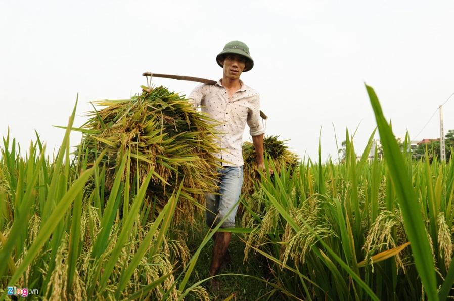 bai hoc tang nang suat cho Viet Nam